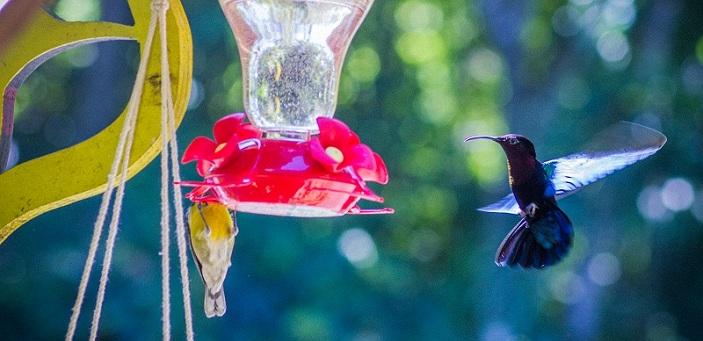 Location de g te deshaies en guadeloupe au jardin des for Au jardin des colibris
